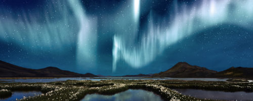 The Northern Lights over the marsh landscape with wildflowers in Landmannarlaugar, Iceland
